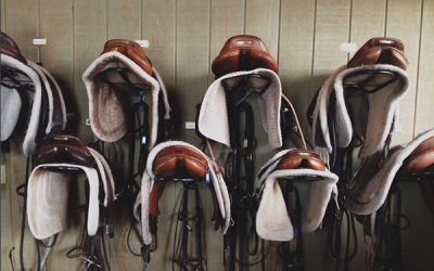 New Horsemanship Course